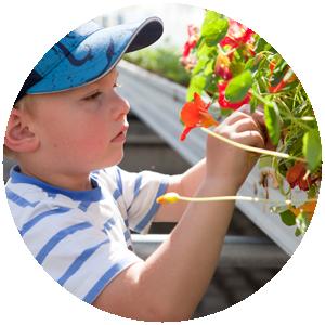 Essblüten | Gemüse- und Gartenbau Hausler | München