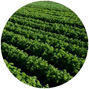 Schnittkräuter | Gemüse- und Gartenbau Hausler | München